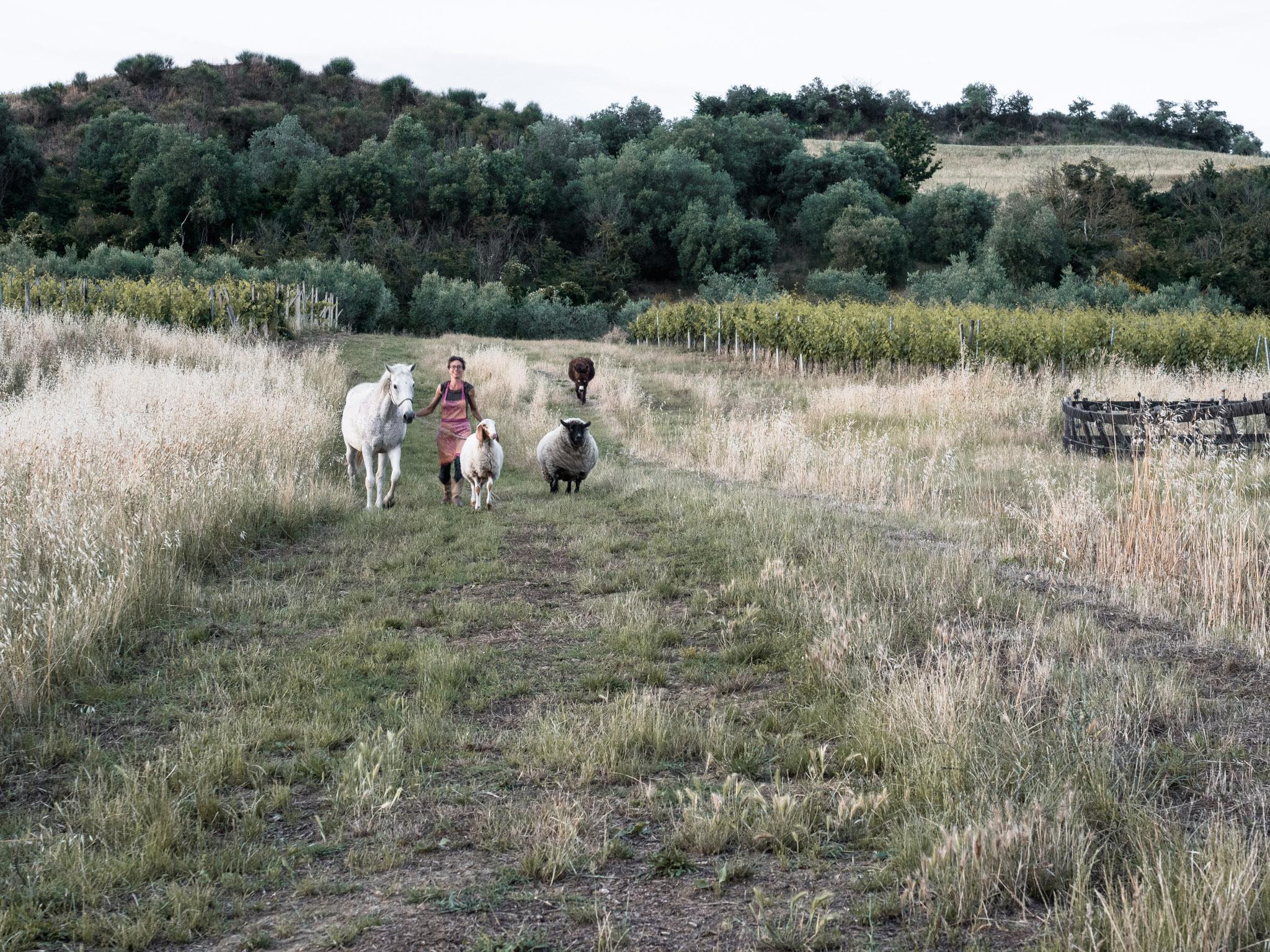 Follonico Agriturismo, Torrita di Siena - Toscana