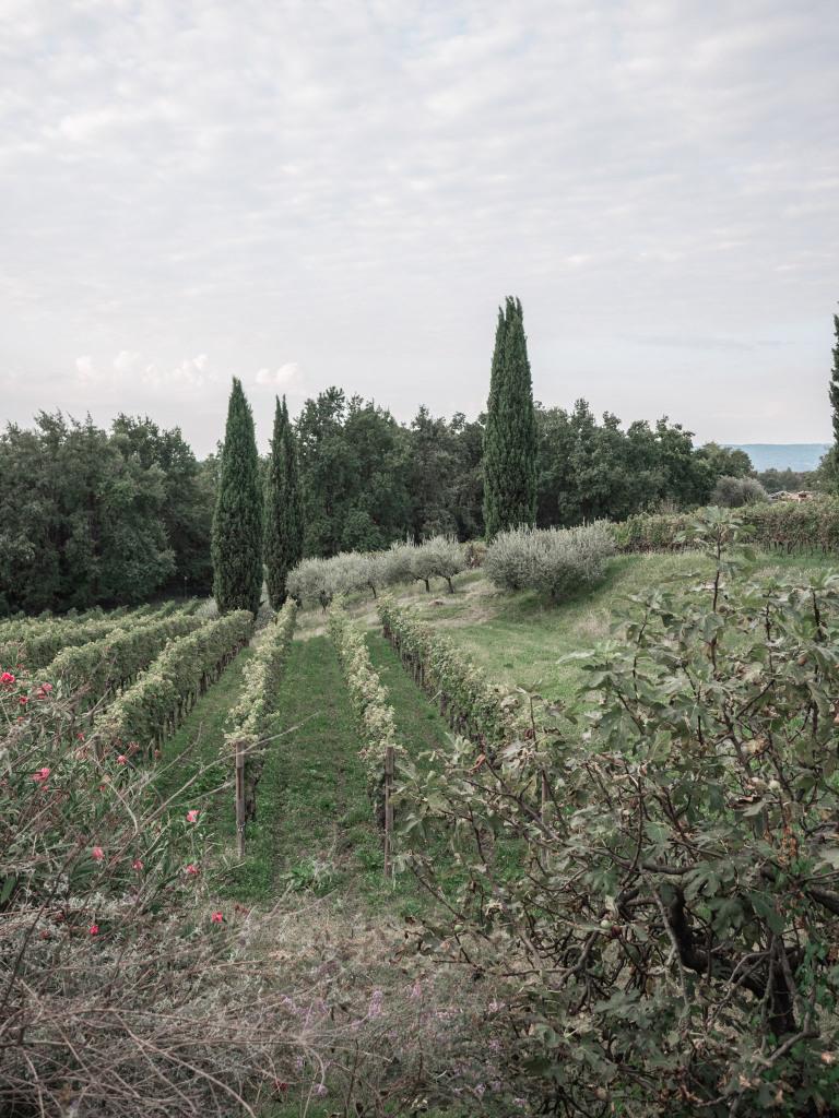Maso di Villa Relais di campagna e cantina, Susegana (Veneto)