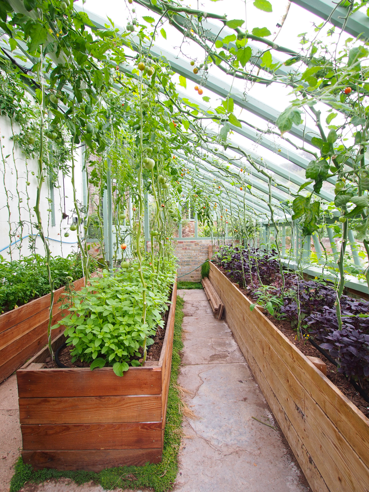 the-pig-at-combe-vegetable-garden